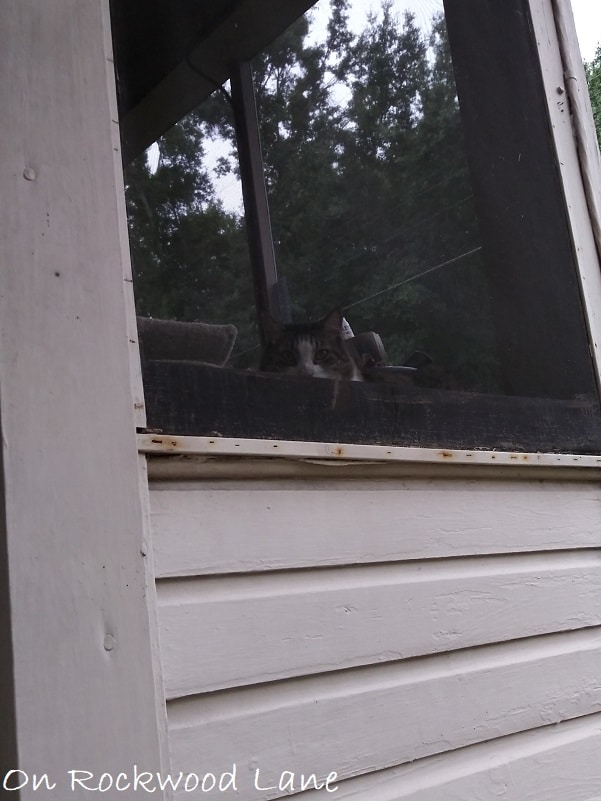 peaking cat